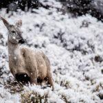 Patagonia en fotos