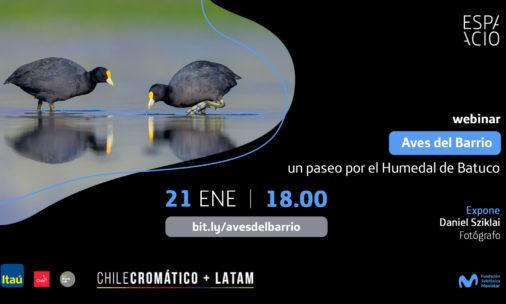 Charla online: Aves del barrio, un paseo por el Humedal de Batuco